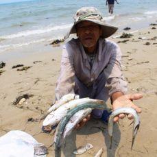 Thảm họa môi trường do Formosa gây nên khiến nhiều trăm ngàn người dân mất công ăn việc làm và vùng biển rộng lớn tại miền Trung VN bị ô nhiễm cũng sẽ được đoàn biểu tình nêu lên trong cuộc biểu tình để hỗ trợ cho vụ kiện tại tòa án quốc tế của các nạn nhân. (Hình trên Internet)