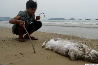 This picture taken on April 20, 2016 shows a boy looking at a dead fish on a beach in Quang Trach district in the central coastal province of Quang Binh. Taiwanese conglomerate Formosa was under attack in Vietnam's normally staid state-media on April 25 over allegations of industrial pollution leaching from a multi-billion dollar steel mill that may have caused mysterious mass fish deaths. / AFP / STR (Photo credit should read STR/AFP/Getty Images)