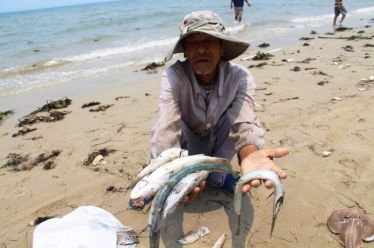 Ngư dân 4 tỉnh miền Trung hoảng hốt trước cảnh cá chết nổi trắng bụng trên bãi biển dài trên 240 Km (Ảnh Internet)