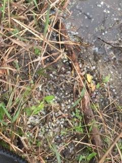 Đất và nước đều có những hạt nhựa pellets bám đầy gây ô nhiễm gần 30 năm qua.