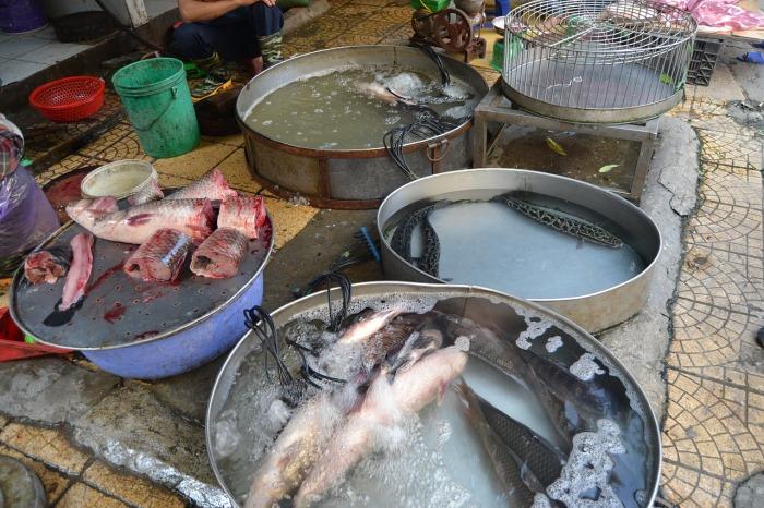 Asia Vietnam Fish Hanoi